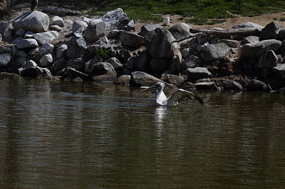 San Photograph - San Diego Zoo - 121243 by DC Photographer