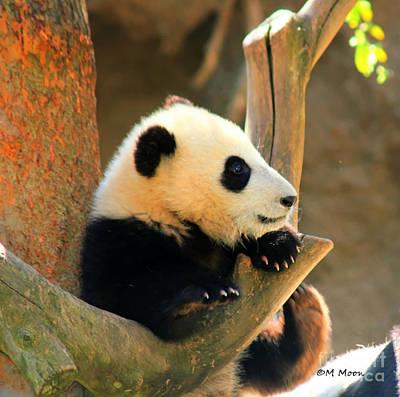 San Diego Zoo Panda Bear Xiao Liwu Art Print