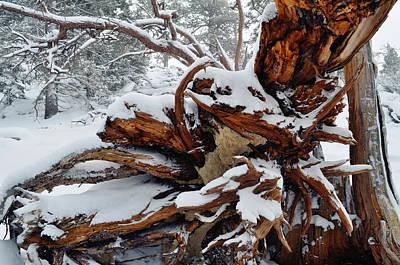 Art Print featuring the photograph San Jacinto Fallen Tree by Kyle Hanson