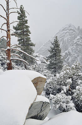 Art Print featuring the photograph San Jacinto Winter Wilderness by Kyle Hanson