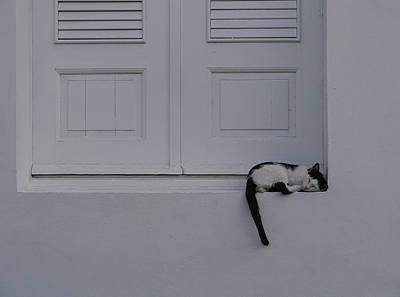 San Juan - Let Sleeping Cats Lie Art Print