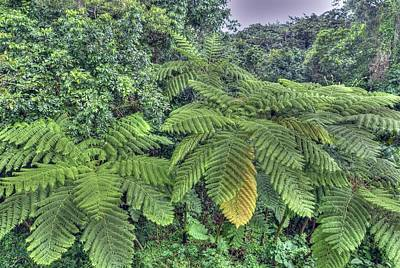 Photograph - San Juan Peurto Rico Rainforest by Willie Harper