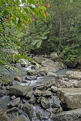 Photograph - San Juan Rainforest by Willie Harper
