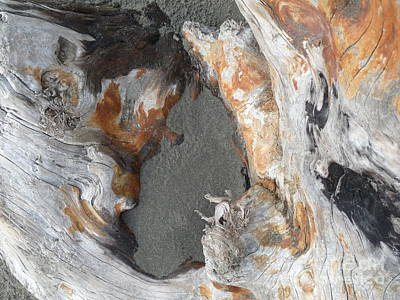 Photograph - Sand And A Rusty Log by Terri Thompson