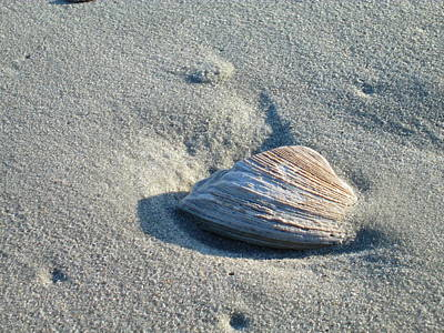 Photograph - Sand And Seashell by Nelson Watkins