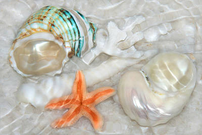 Photograph - Sand And Shell Serenity by Leda Robertson