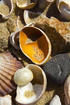 Photograph - Sand Covered Shells by Eugene Bergeron