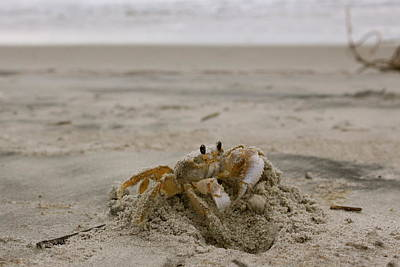 Photograph - Sand Crab by Nelson Watkins