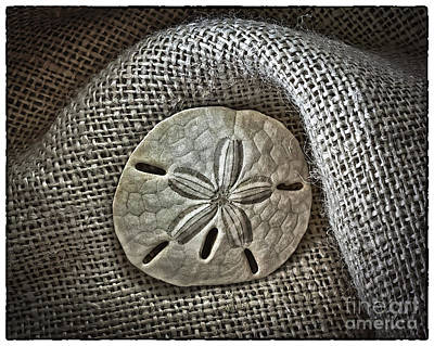 Photograph - Sand Dollar 1395 by Walt Foegelle