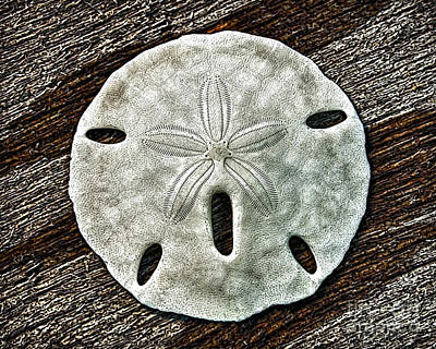 Photograph - Sand Dollar 1531 by Walt Foegelle