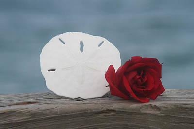 Photograph - Sand Dollar And Red Rose by Cathy Lindsey