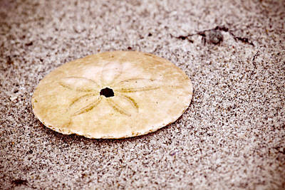 Photograph - Sand Dollar On The Beach by Peggy Collins