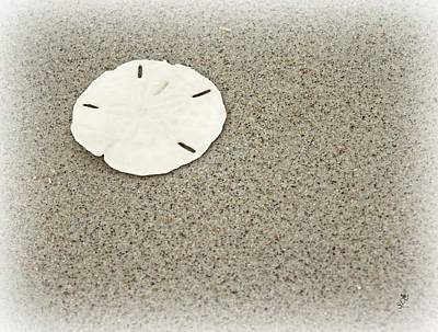 Photograph - Sand Dollar by Sandra Clark