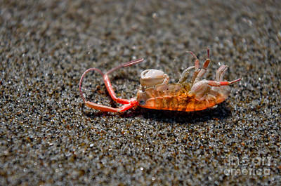 Photograph - Sand Flea Remains by Adria Trail