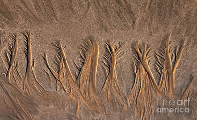 Photograph - Sand Forest by Alice Cahill