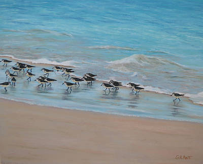 Painting - Sand Piper On Parade by Joanne Grant