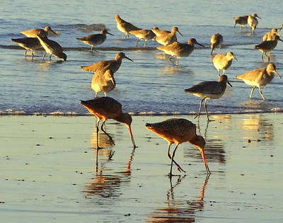 Photograph - Sand Pipers by Donna Spadola