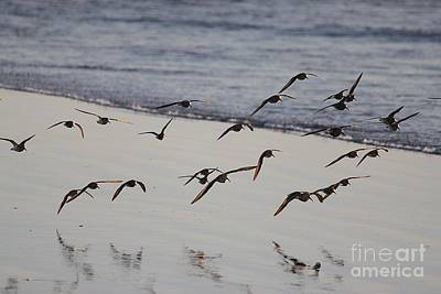 Photograph - Sand Pipers by Erica Hanel