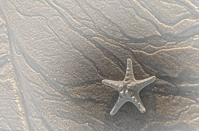Photograph - Sand Prints And Starfish II by Susan Candelario