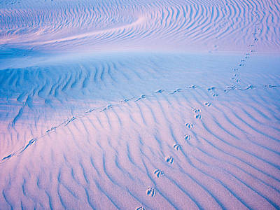 Photograph - Sand Structures Shadows And Bird Traces No1 by Martin Liebermann