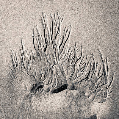 Photograph - Sand Trails by Patricia Schaefer