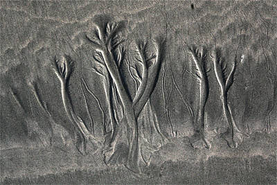 Photograph - Sand Trees by Alicia Kent