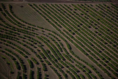 Photograph - Sandalwood Plantation by Carole Hinding