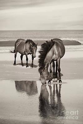 Glass Eyed Pony Photograph - Sandbar Reflections by Lyndsey Warren