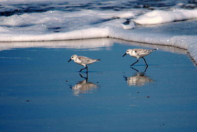 Photograph - Sanderling 002 by Larry Ward