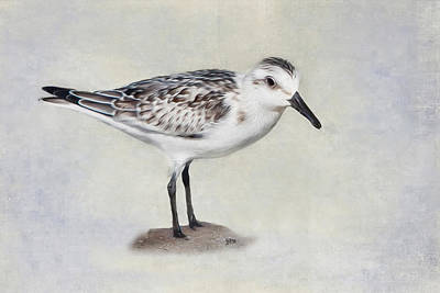 Digital Art - Sanderling by Bill Wakeley
