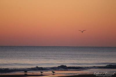 Photograph - Sanderlings And A Seagull by Robert Banach