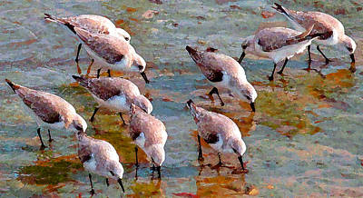 Sanderlings At Alamitos Bay Art Print by Timothy Bulone