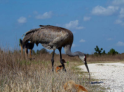 Sandhill Crane 037  Art Print by Chris Mercer