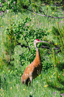 Abstract Shapes Janice Austin Royalty Free Images - Sandhill Crane Royalty-Free Image by Brandon Smith