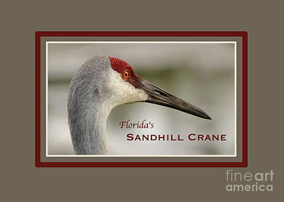 Photograph - Sandhill Crane Card by Nancy Greenland
