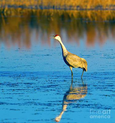 Photograph - Sandhill Crane Honks by Martha Marks