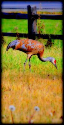 Photograph - Sandhill Crane II by Kathy Sampson
