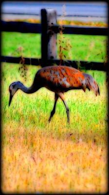 Photograph - Sandhill Crane IIi by Kathy Sampson