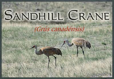 Flyers Mixed Media - Sandhill Crane Poster by Kae Cheatham