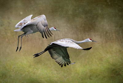 Vogel Wall Art - Photograph - Sandhill Cranes 2 by Angie Vogel