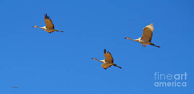 Photograph - Sandhill Cranes 5 by Roena King