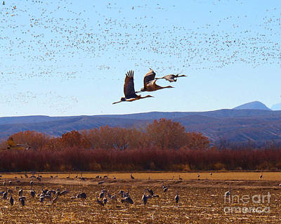 Photograph - Sandhill Cranes 6 by Roena King