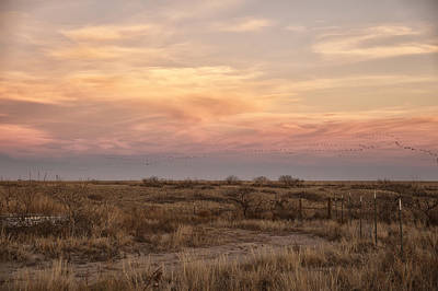 Photograph - Sandhill Cranes At Sunset by Melany Sarafis