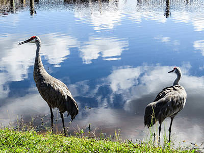Sandhill Cranes At The Lake II Art Print