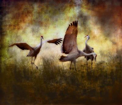 Photograph - Sandhill Cranes  by Ellen Heaverlo