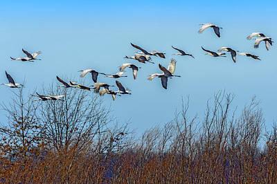 Wildlife Area Photograph - Sandhill Cranes Flying by Rona Schwarz