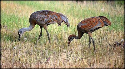 Photograph - Sandhill Cranes I by Kathy Sampson