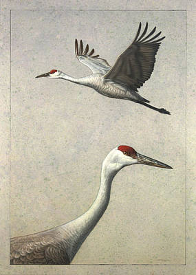 Nature Drawing - Sandhill Cranes by James W Johnson