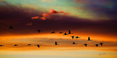 Sandhill Cranes Take The Sunset Flight Art Print by Bill Kesler