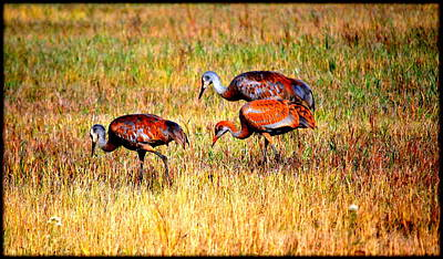 Photograph - Sandhill Family by Kathy Sampson
